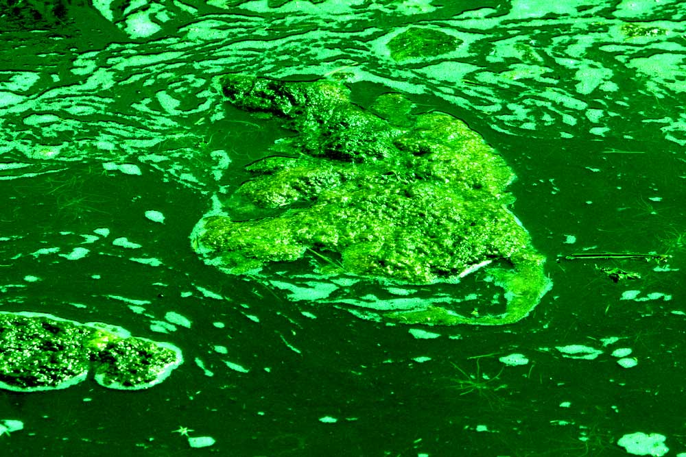 Foto van sloot groen alg | Archief EHF
