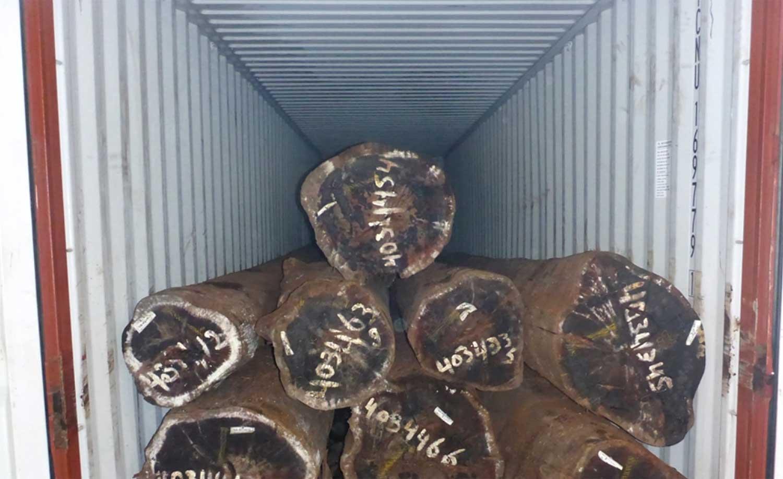 boomstammen-container