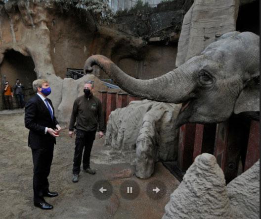 Koning bezoekt diergaarde blijdorp