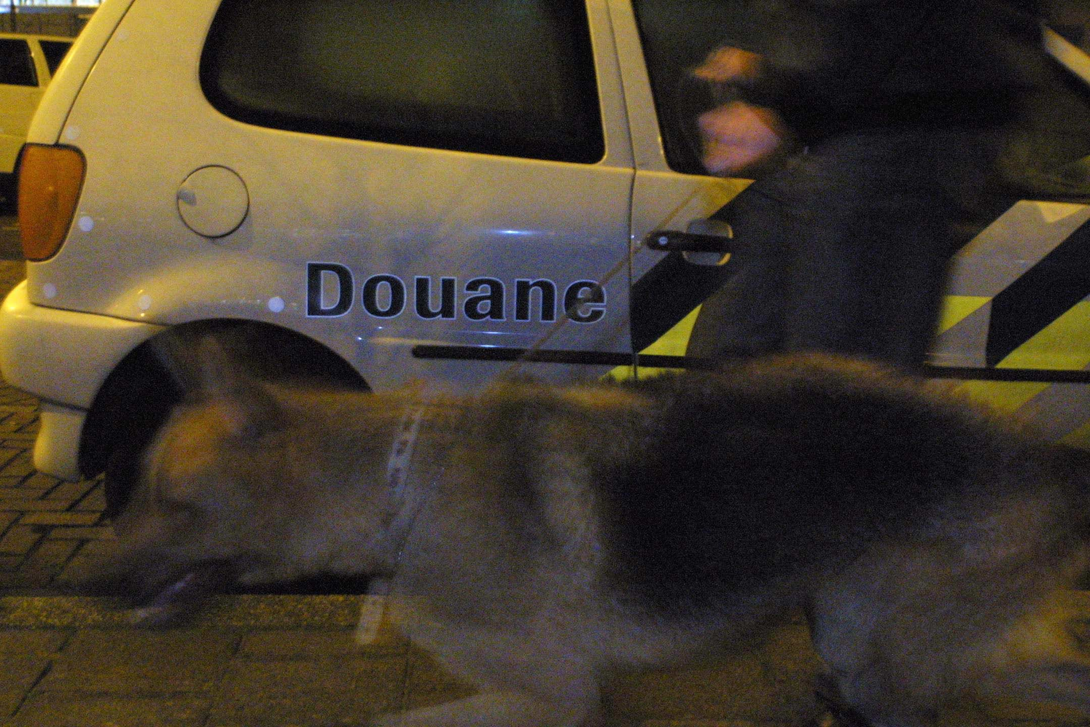 Douane vindt 65 kilo cocaïne tussen kamerplanten