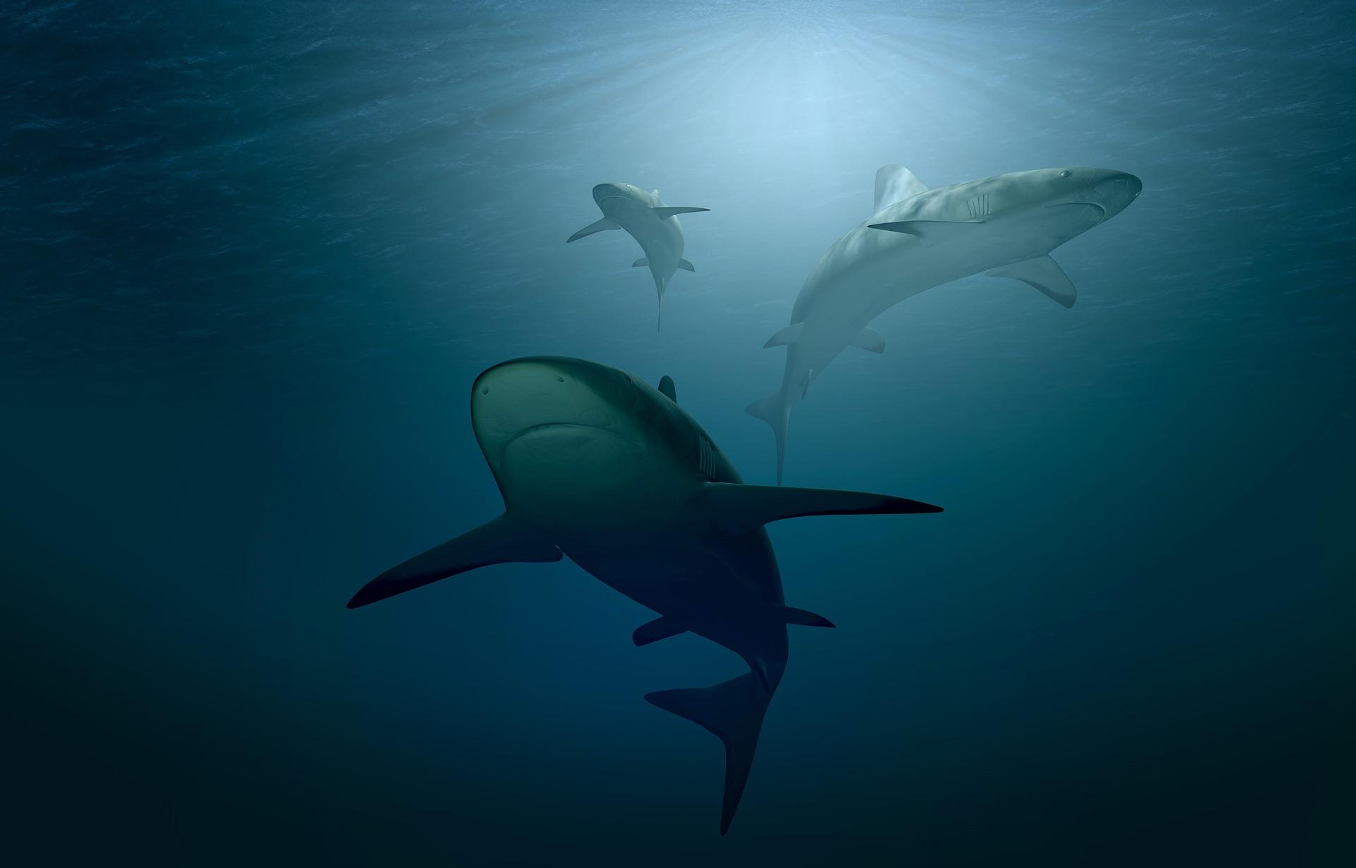 foto van haai