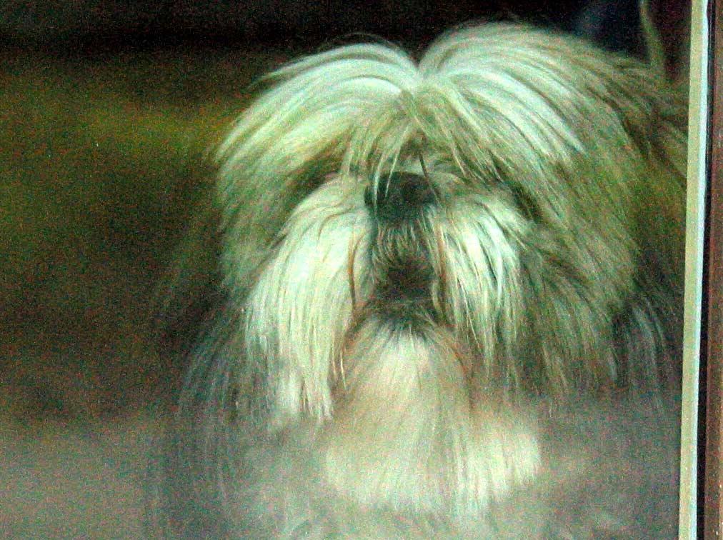 Hond zonder kop en poten in park in Brunssum aangetroffen