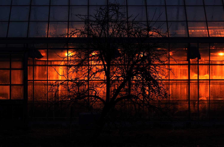 kas-boom-donker-verlichting