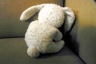 Foto van konijn kind kindermishandeling   Archief EHF
