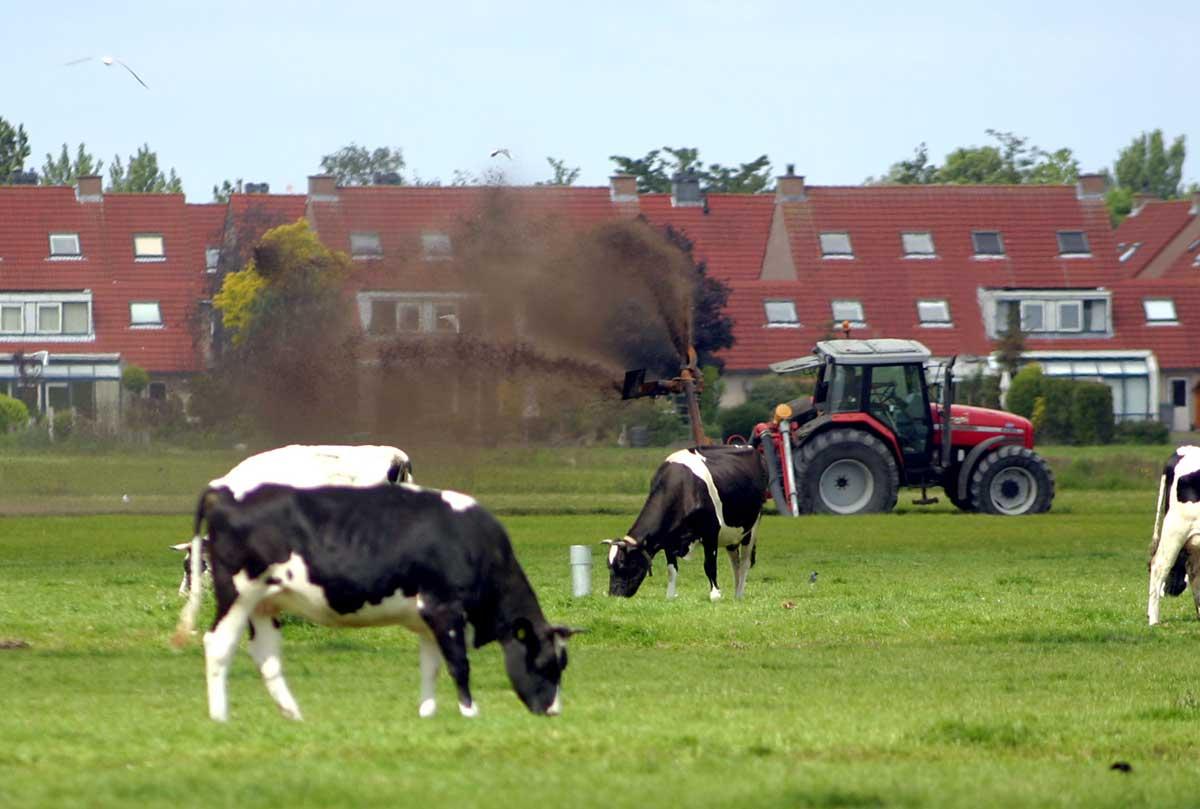 Akkoord over maatregelen fosfaatreductie melkveehouderij