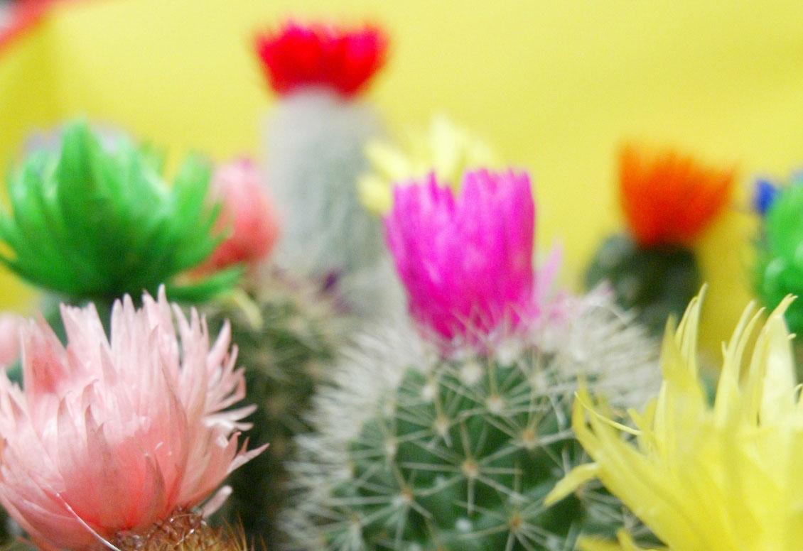 foto van plant | fbf