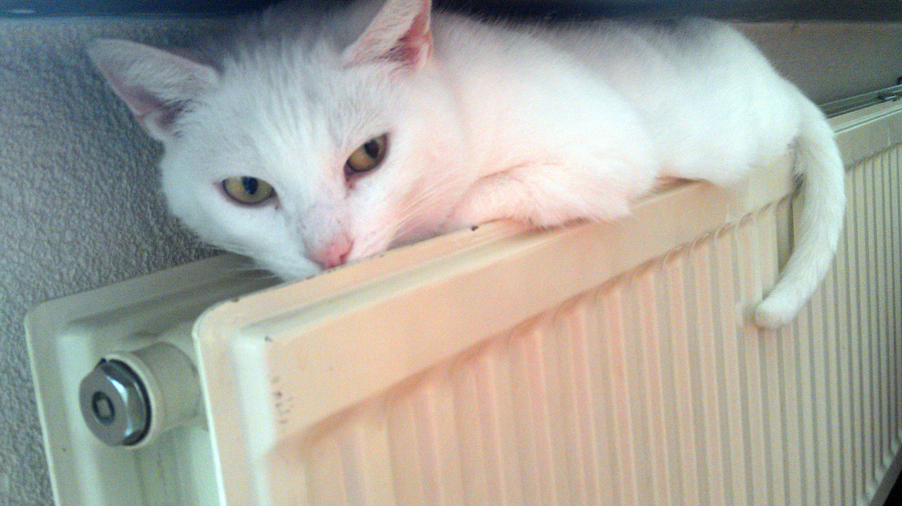 Poes op verwarming