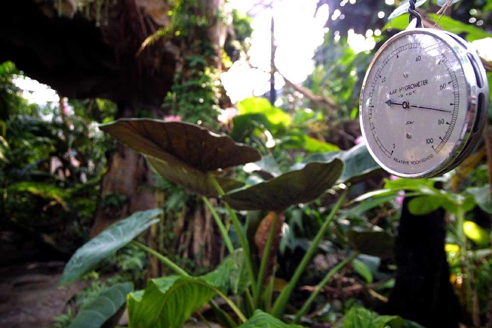 Foto van hygrometer in tropische kas | Archief EHF