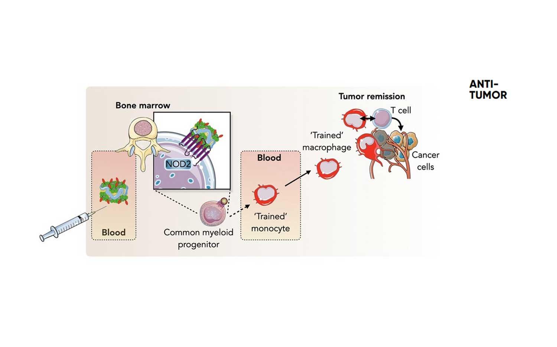 tumor-immuun