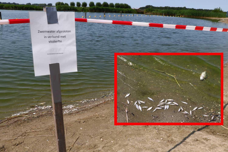 Honderden dode vissen in de Krabbeplas