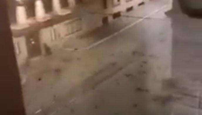 Tientallen vogels vallen dood uit de lucht in Rome
