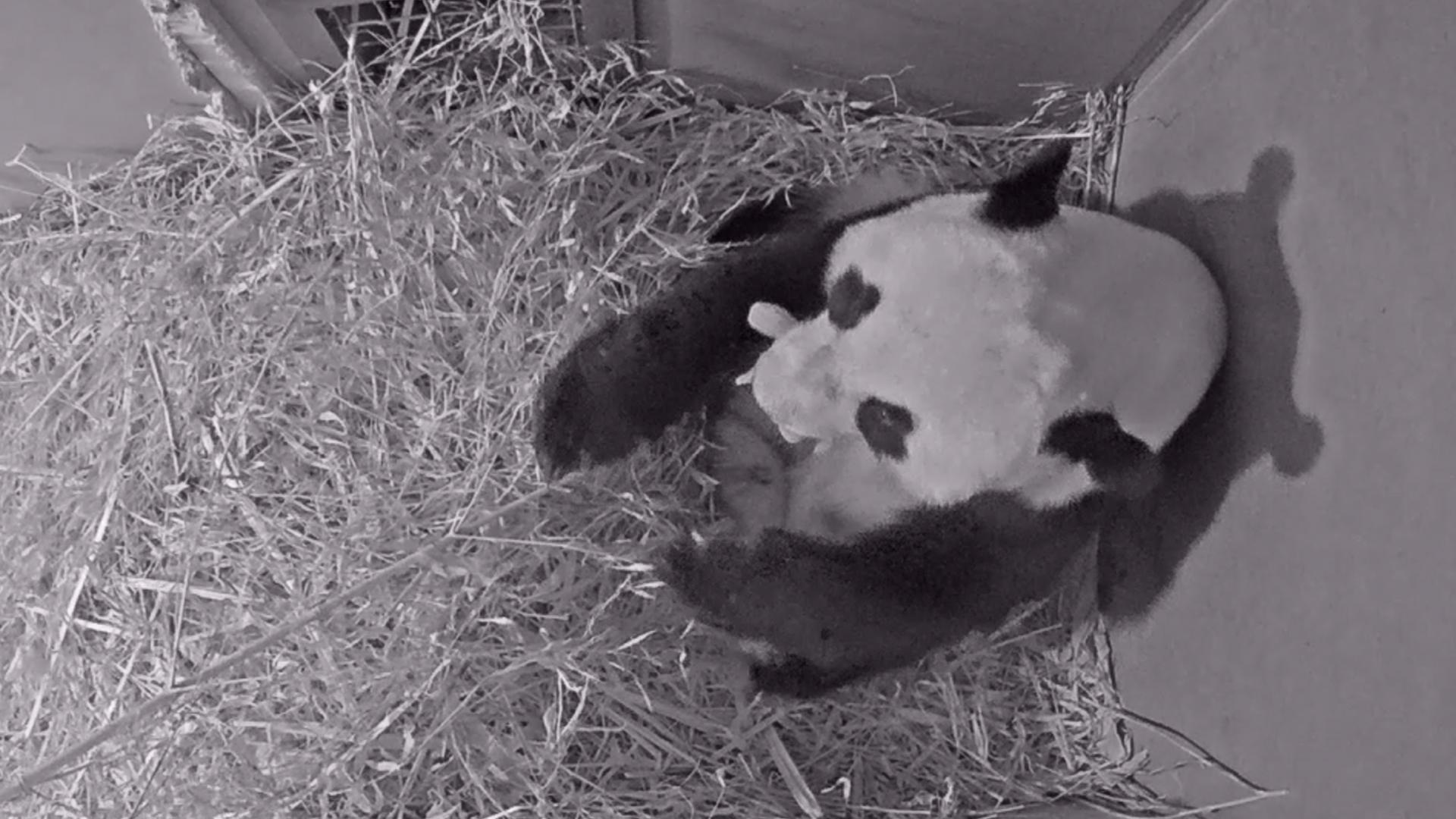 Panda jong