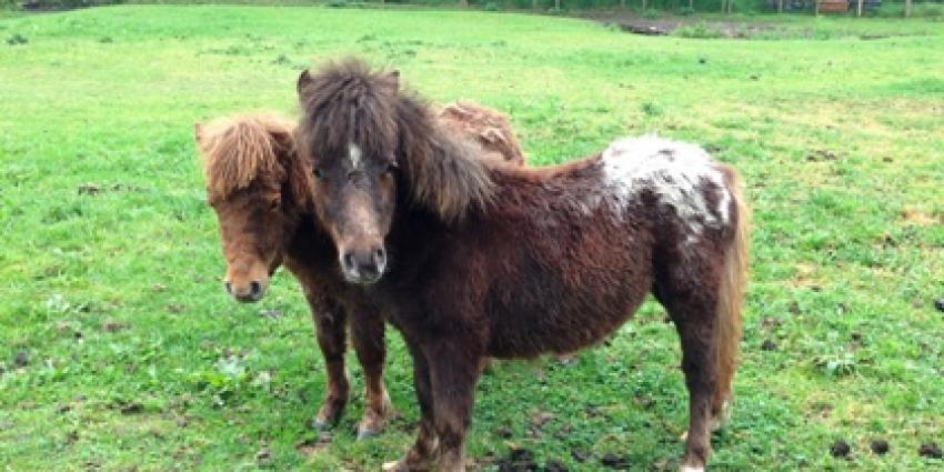Foto van verwaarloosde pony's   Politie