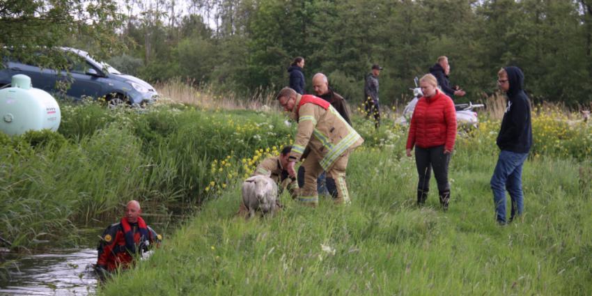 Hulpverleners helpen schaap
