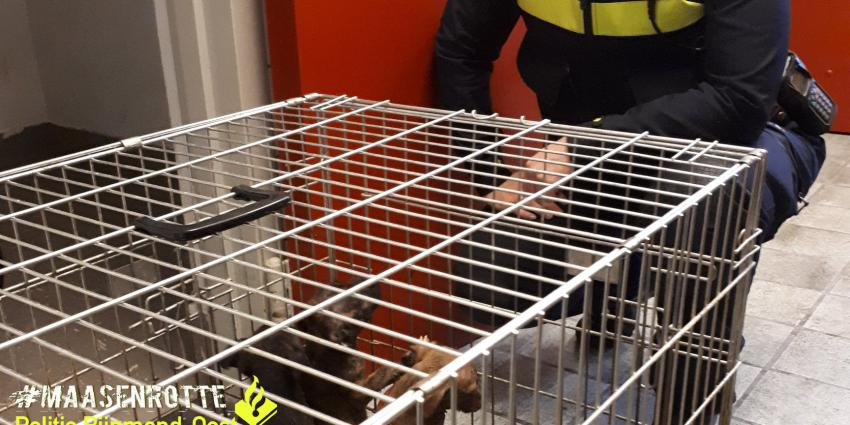 Verwaarloosde puppy's  in beslag genomen