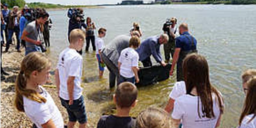Tientallen zeldzame steuren uitgezet in de Rijn