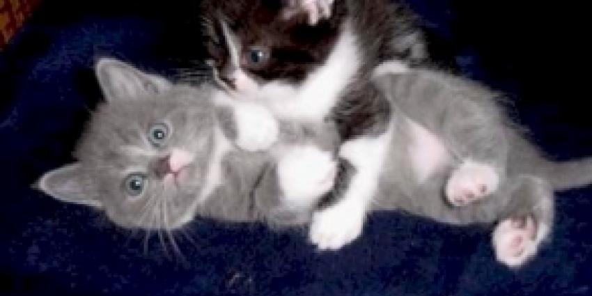 Foto van katjes | Archief FBF.nl