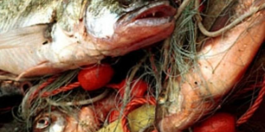 Vier mannen aangehouden op verdenking van visfraude