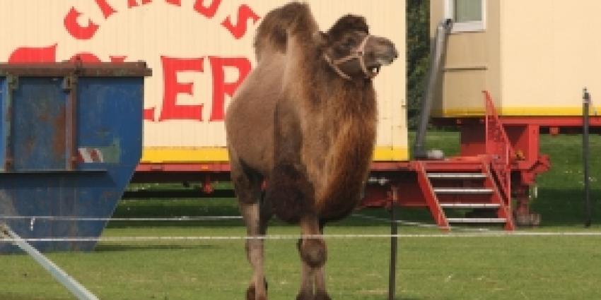 PvdD is boos op kameelrijdende Van der Meyde