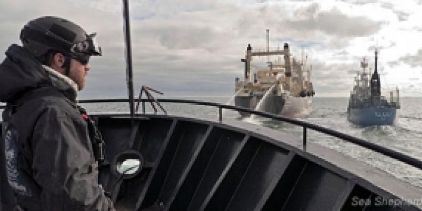 Nederland tegen walvisvaart en voor veiligheid op zee