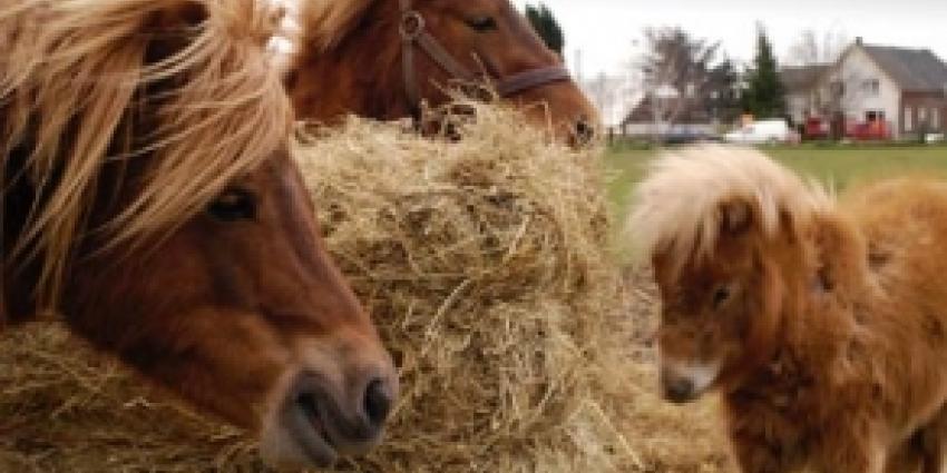 Pony in weiland dood aangetroffen