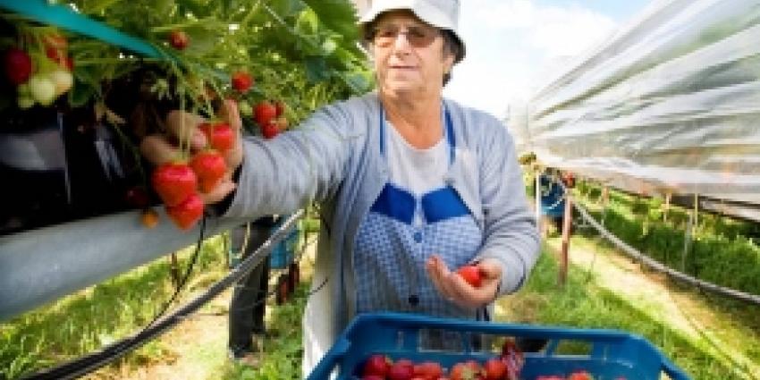 Steeds meer groenten en fruit in supermarkt zonder landbouwgif