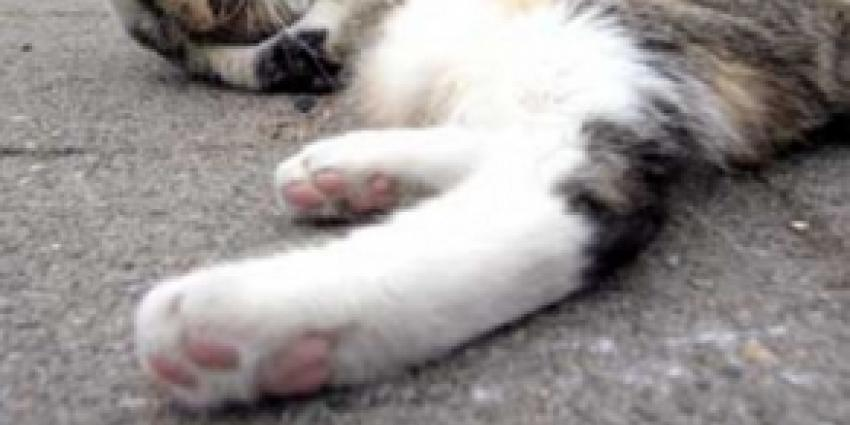 Onbekende schopt in Delft katten dood
