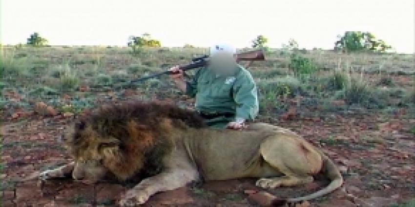'Leeuw met uitsterven bedreigd'