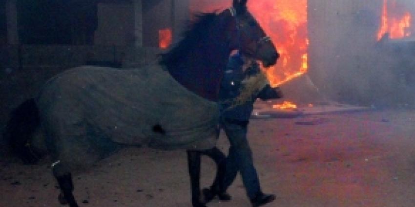 Paarden komen om bij helse brand