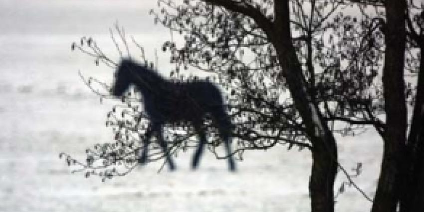 NVWA haalt 33 sterk verwaarloosde paarden weg op Texel
