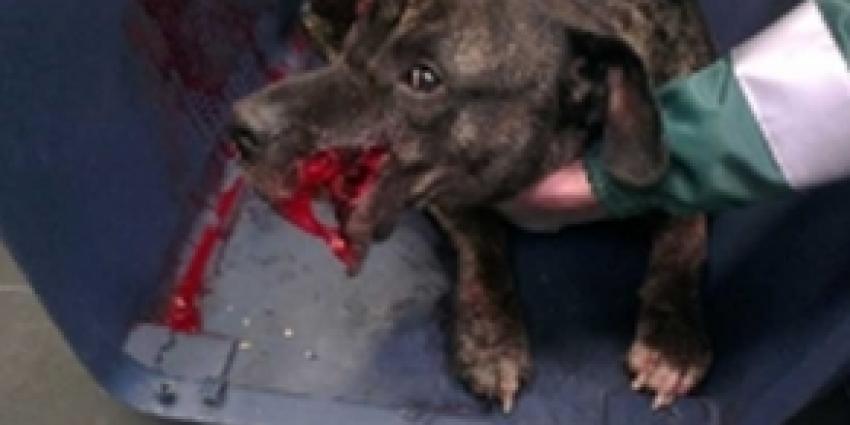 Hond met ernstige snijwonden aangetroffen na woninginbraak