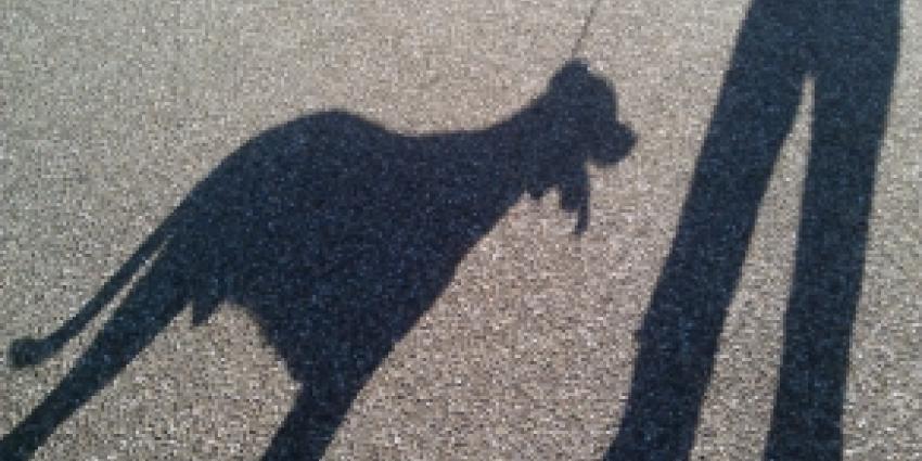 Zeer verwaarloosde hond naar dierenasiel