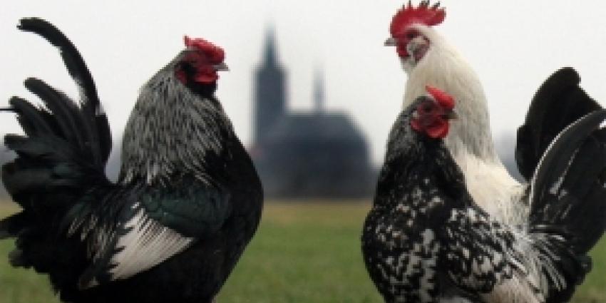 Vogelgriep vastgesteld in Zeeland
