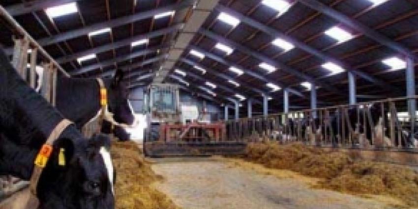 Aflatoxine in Nederlandse melk aangetroffen