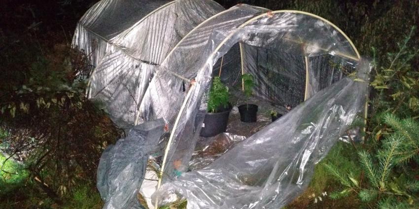 Politie verwisselt hennepplanten met denneboompjes