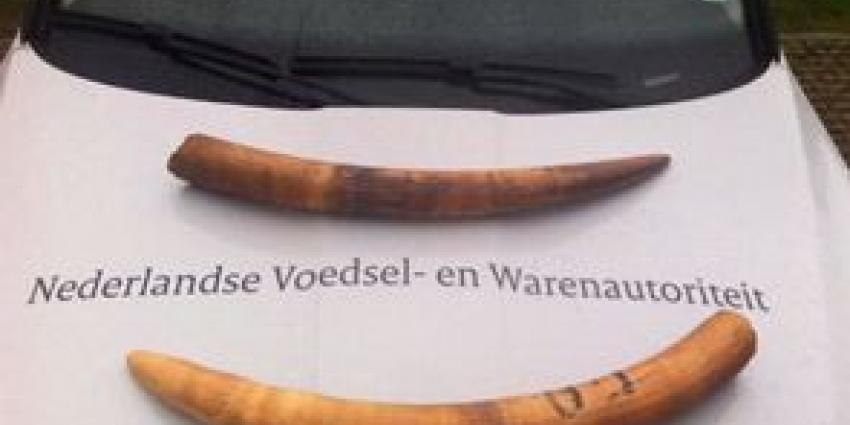 NVWA neemt ivoren slagtanden in beslag
