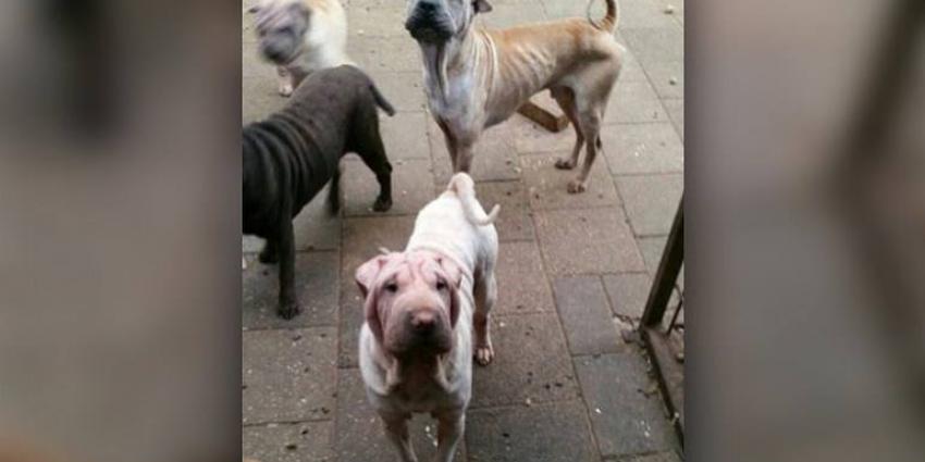 Verwaarloosde honden en katten in beslag genomen