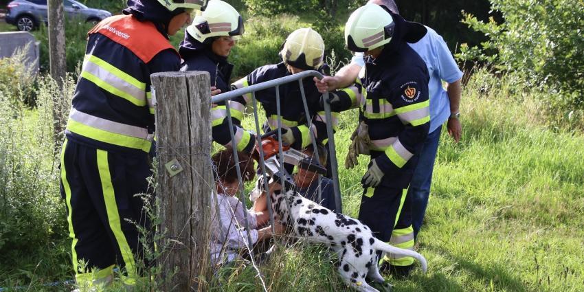 Dalmatiër vast in hek