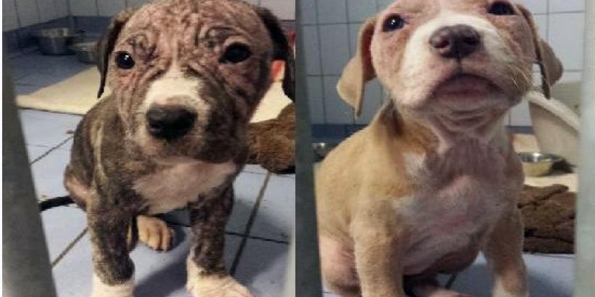 Pups in doos achtergelaten, politie zoekt eigenaar