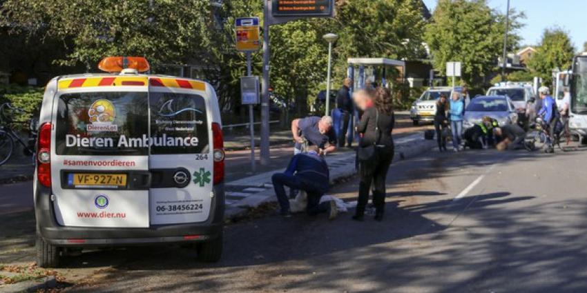 Zwaargewonde bij aanrijding, hond overleden