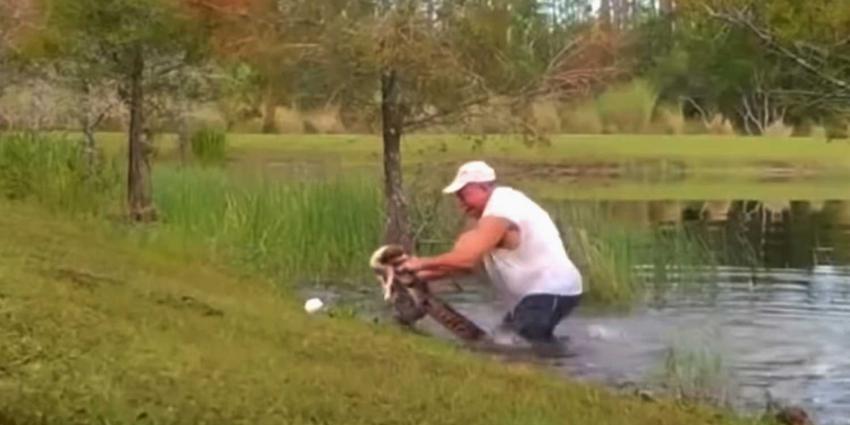 alligator-hond-redding