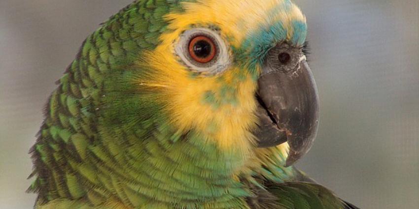 Eigenaar dierenwinkel moet cel in voor illegale handel in beschermde vogels