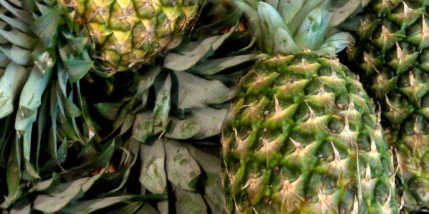 Fruithandelaar vrijgesproken van cocaïnesmokkel in lading ananassen