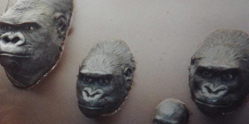 apenheul-gorilla