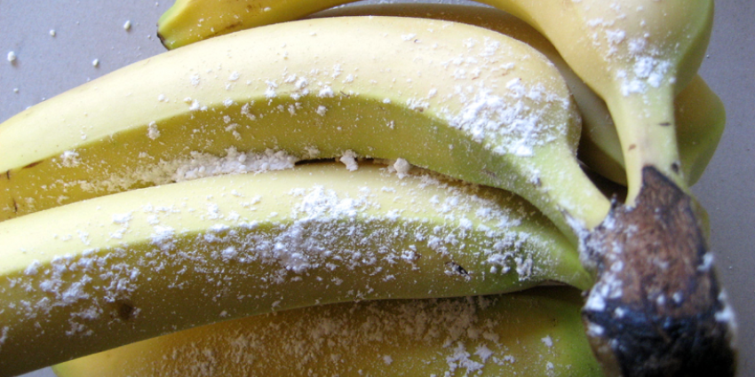 527 kilo cocaïne tussen lading bananen uitgevist