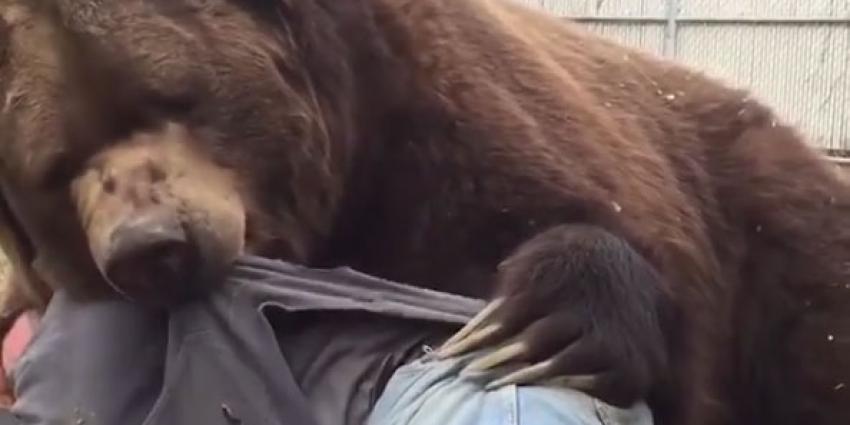 Twee knuffelende beren gespot