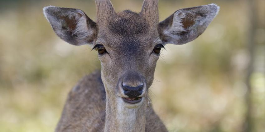 Boswachters weigeren gezonde dieren af te schieten