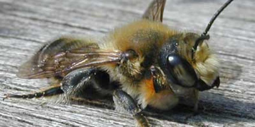 Nederland grootste insectenimporteur van de EU