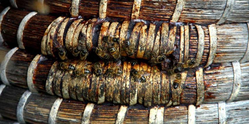 Besmettelijke ziekte bij bijen in Zuidlaren vastgesteld