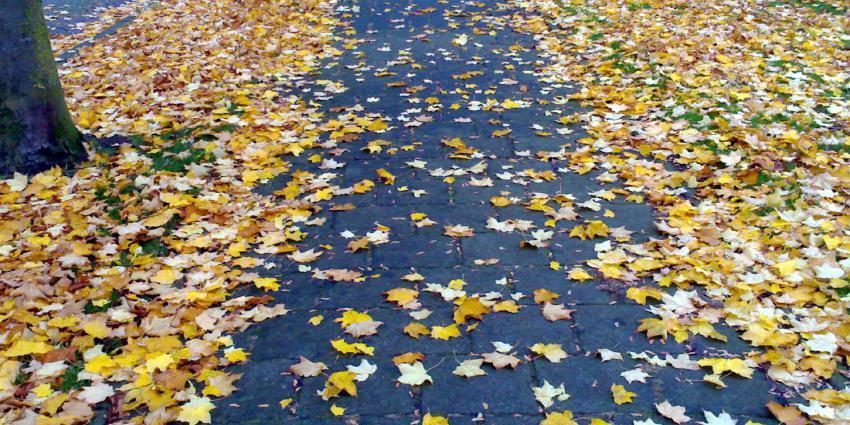 bladeren-herfst